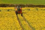 2090743x150 - پاورپوینت زراعت کلزا (آفات، بیماری ها وعلف های هرز)